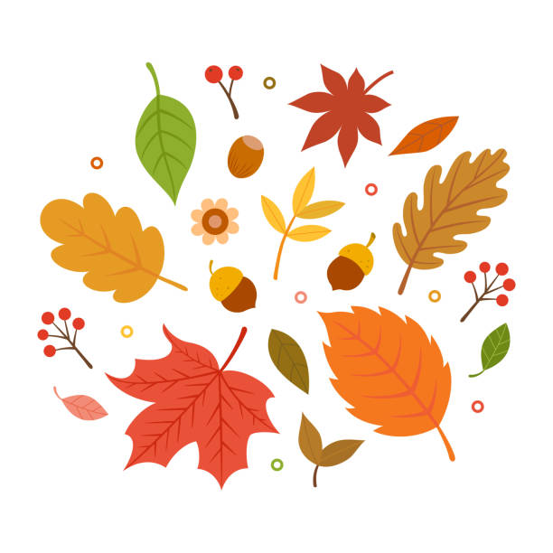 autumn leaves set isolated on white background - autumn stock illustrations