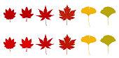 Autumn leaves set (Maple leaves & ginkgo)