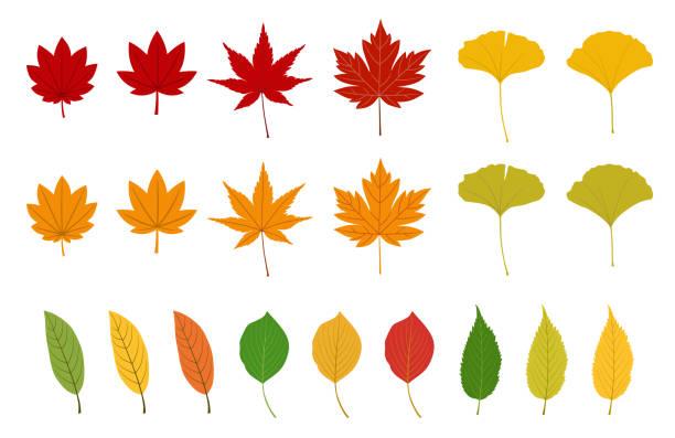 Autumn leaves set Autumn leaves set fall leaves stock illustrations