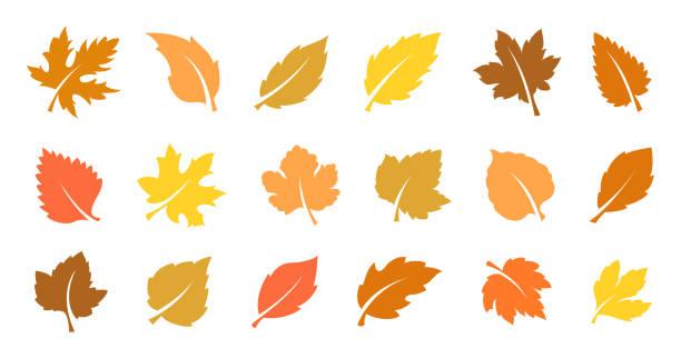 Autumn leaves set Set of yellow leaves. Autumn design element. Vector illustration fall leaves stock illustrations