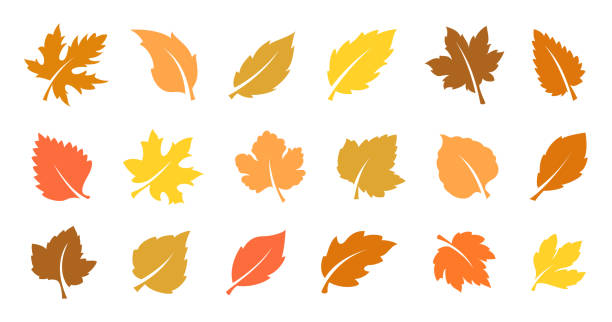 autumn leaves set - autumn stock illustrations