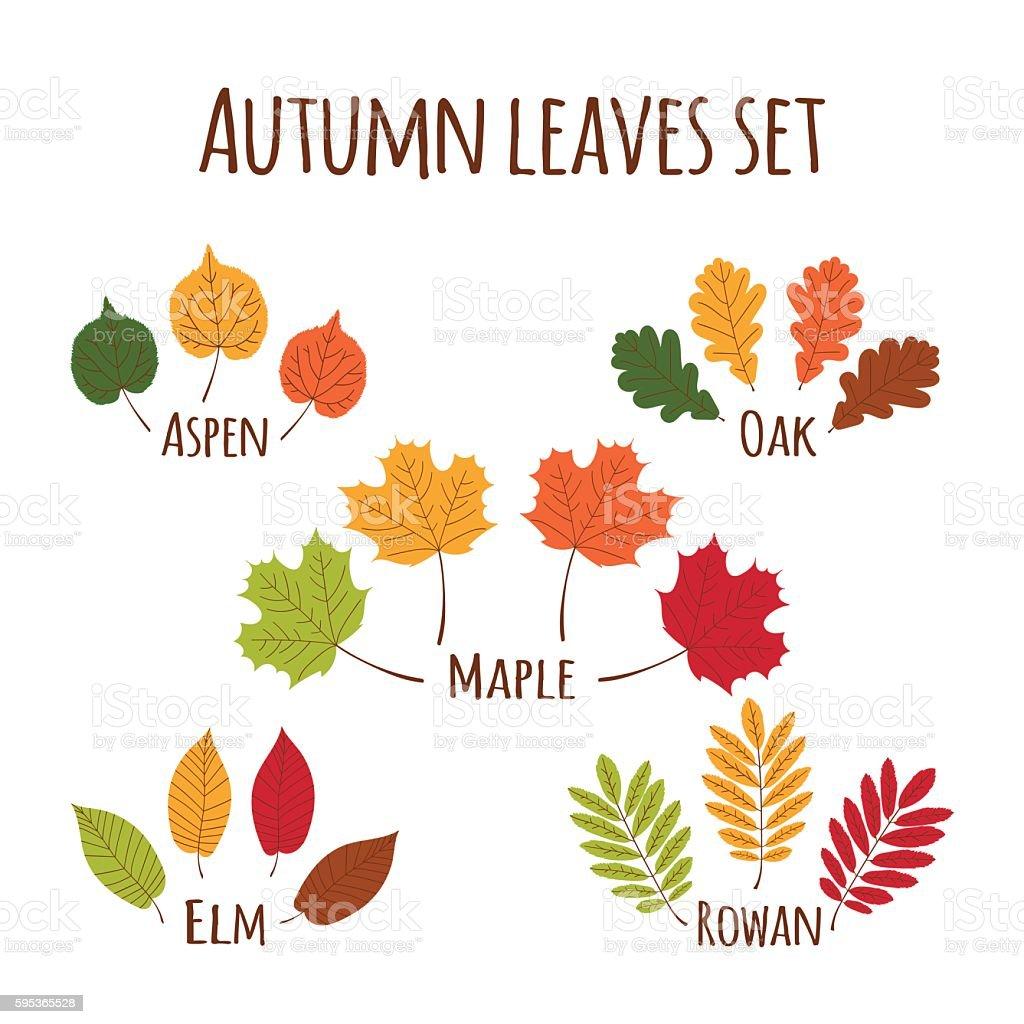 Autumn leaves set vector. vector art illustration