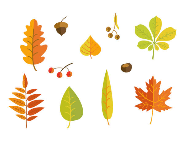 autumn leaves - fall stock illustrations