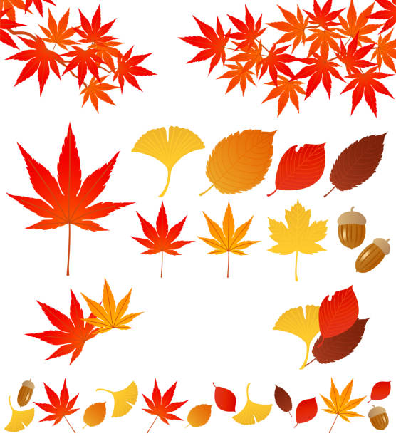 autumn leaves. Set of autumn leaves. maple leaf stock illustrations
