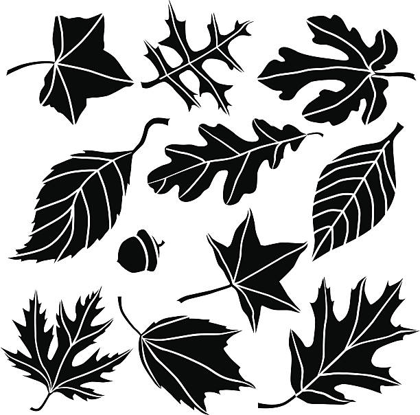 Autumn leaves A vector illustration of assorted North American leaves. autumn clipart stock illustrations