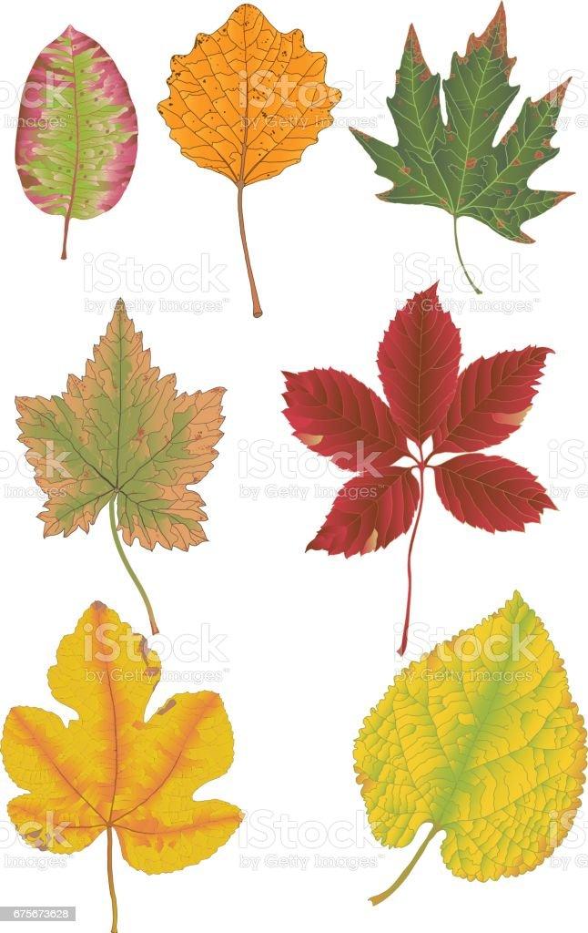 autumn leaves autumn leaves - arte vetorial de stock e mais imagens de amarelo royalty-free