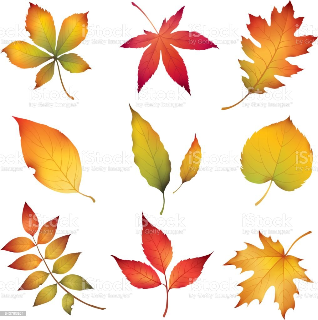 Autumn Leaves vector art illustration