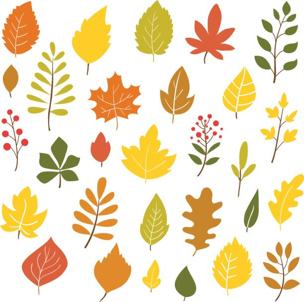 Autumn leaves. Autumn leaves, hand drawn style, vector illustration fall leaves stock illustrations