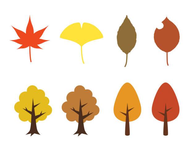 Autumn leaves Illustration of Autumn leaves. ginkgo stock illustrations