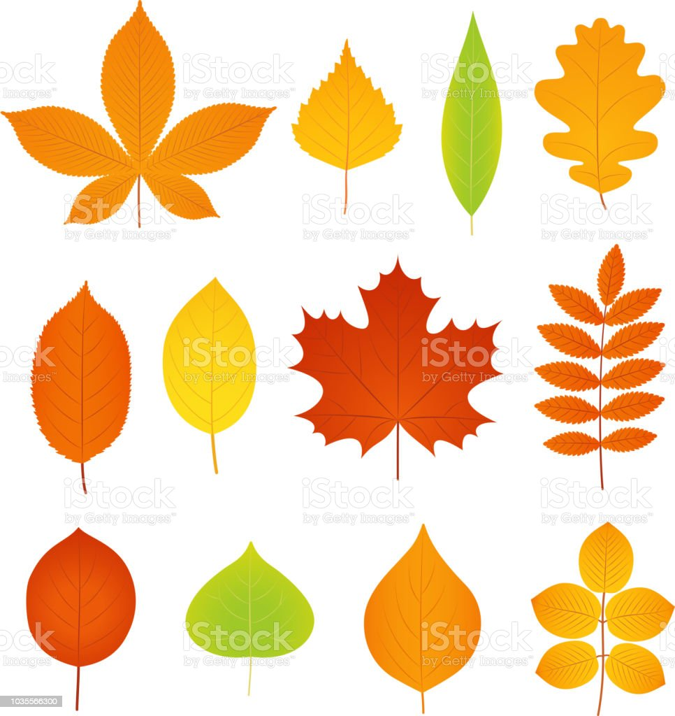 Autumn Leaves Vector Set Of Symbols Of Fall Leaf Stock