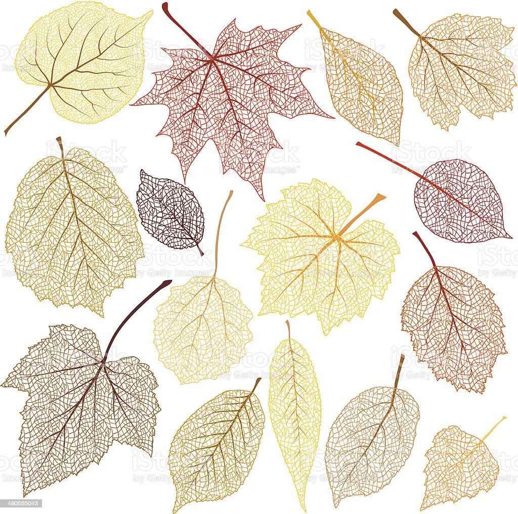 Autumn leaves with streak vector art illustration