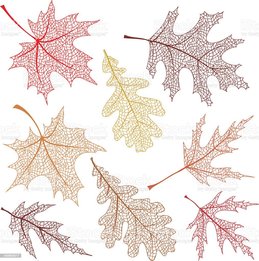 Autumn leaves with vein royalty-free autumn leaves with vein stock vector art & more images of arts culture and entertainment