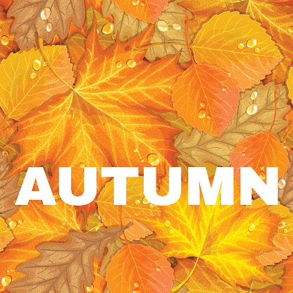 Autumn letter with leaves