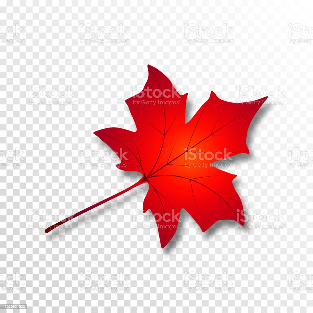 Autumn Maple Leaf Fall Leaf With Shadow On Transparent Background Vector Illustration Stock Illustration Download Image Now Istock
