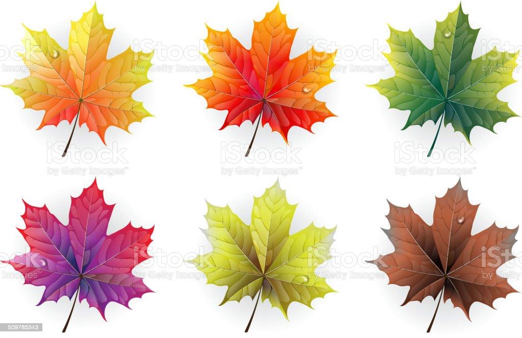 Autumn maple leaves vector art illustration