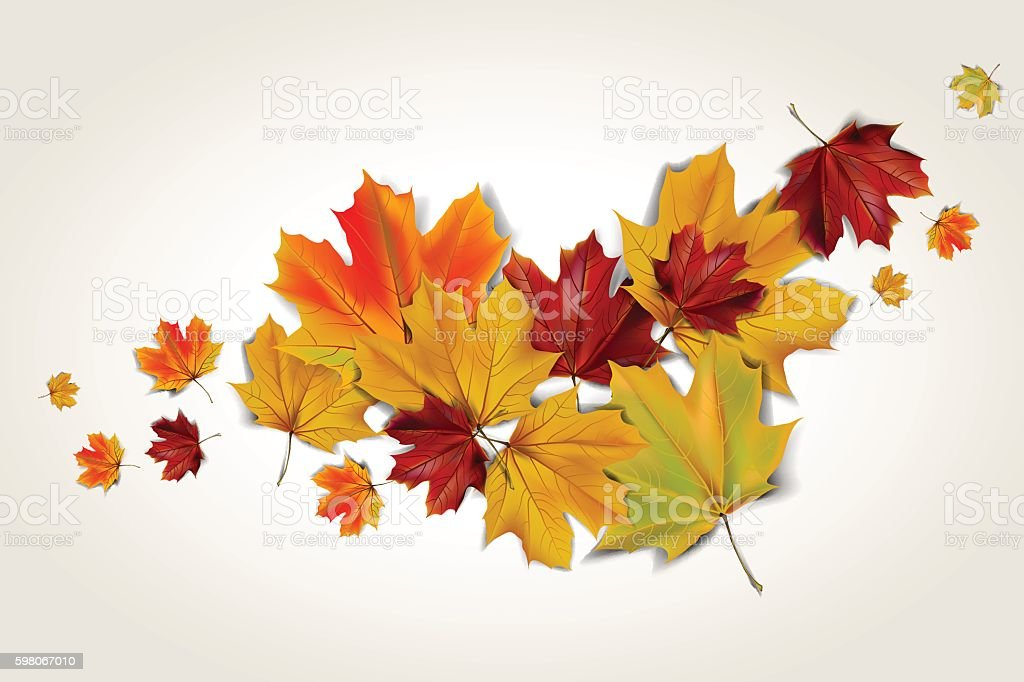 autumn maple leaves vector art illustration