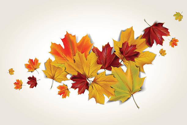 autumn maple leaves - leaf stock illustrations, clip art, cartoons, & icons