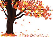 Autumn maple tree with falling leaves.