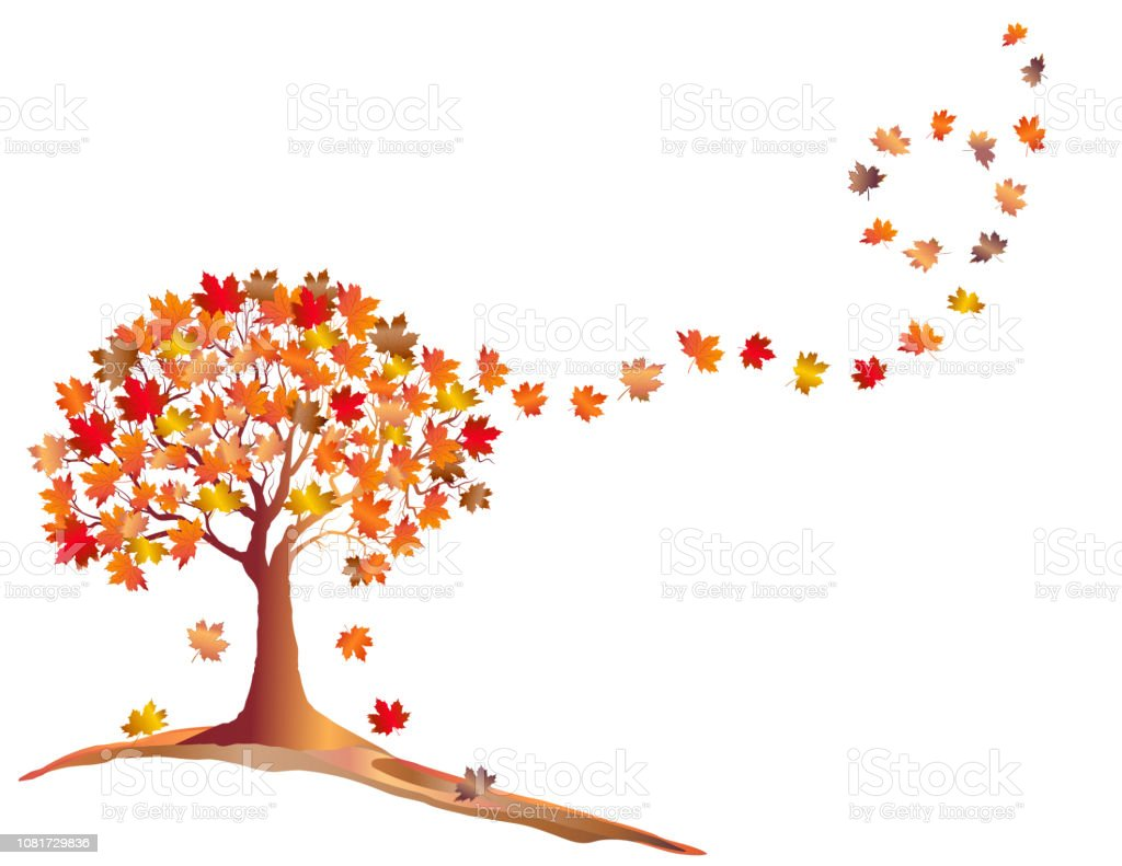 Autumn Maple Tree With Falling Leaves Isolated On White Background Stock Illustration Download Image Now Istock