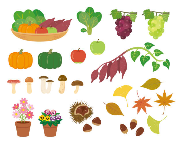 秋の素材セット - マスカット イラスト点のイラスト素材/クリップアート素材/マンガ素材/アイコン素材