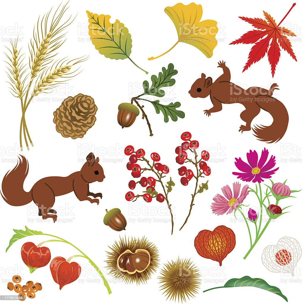 Autumn Material,Isolated royalty-free autumn materialisolated stock vector art & more images of acorn
