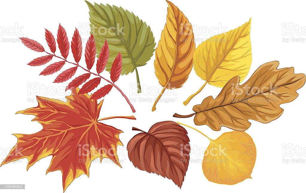Autumn palette vector art illustration