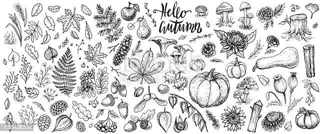 Autumn nature vector sketches. Hand drawn set of forest plants, leaves, branches, mushrooms, cones, herbs, rowan, pumpkins, seasonal flowers and other harvest. Black line isolated illustrations