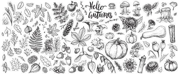 autumn plants vector sketches. hand drawn set of harvest, leaves and seasonal fall flowers. - vintage nature stock illustrations, clip art, cartoons, & icons