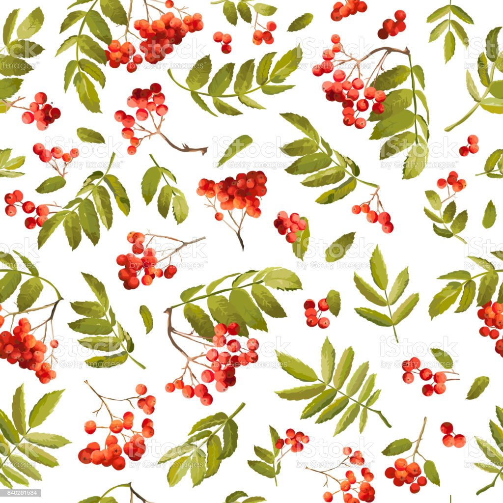 Autumn Rowan Berry Seamless Background Floral Fall Pattern With