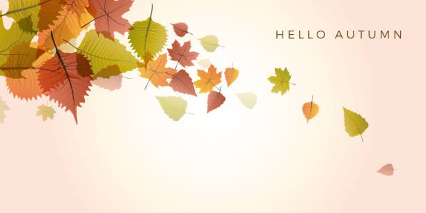 Autumn sale background, layout decorate with leaves of autumn. Poster and frame leaflet or web banner. Vector template. Autumn sale background, layout decorate with leaves of autumn. Poster and frame leaflet or web banner. Vector template. fall leaves stock illustrations