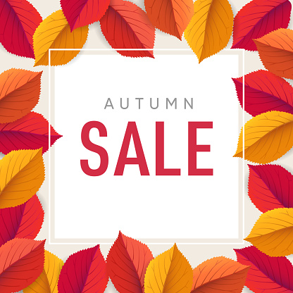 Autumn sale flyer template. Bright colorful fall leaves. Poster, card, label, web banner. Seasonal Thanksgiving design. Vector illustration background. Square floral frame.