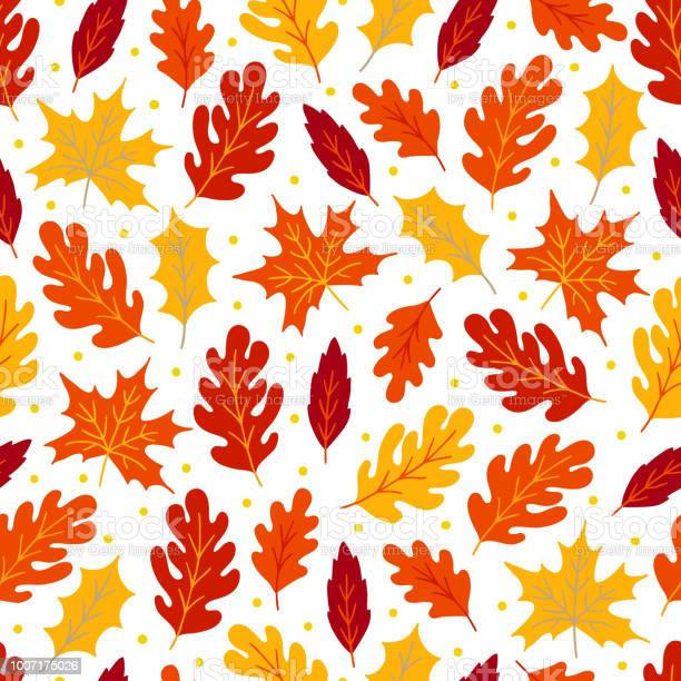 Autumn seamless pattern with maple and oak leaves vector id1007175026?b=1&k=6&m=1007175026&s=612x612&h=zykrbguvpa52duvewsxar7kkeigftgt j2gkn0jzgdg=