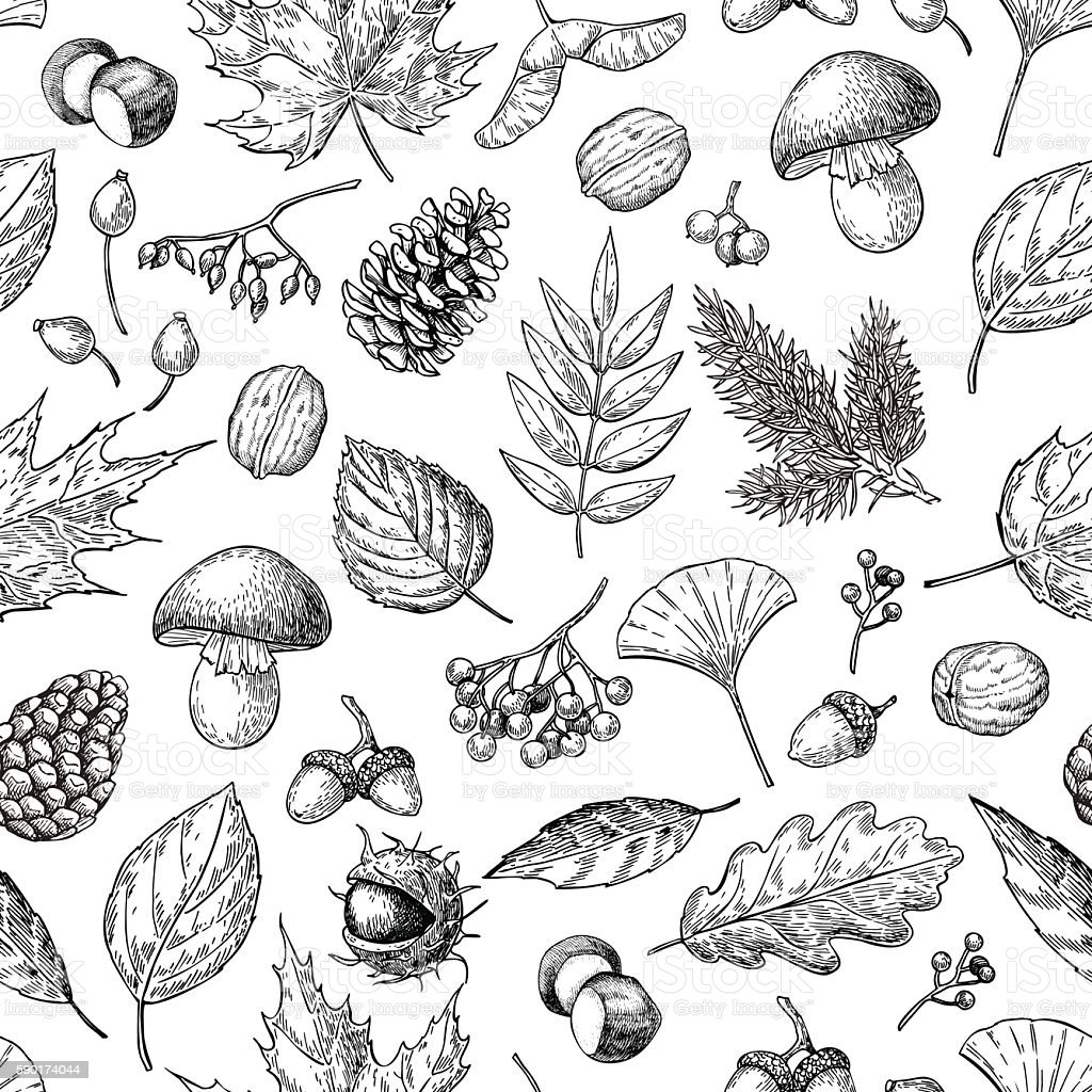 Autumn seamless vector pattern with leaves, berries, fir cones, - ilustración de arte vectorial