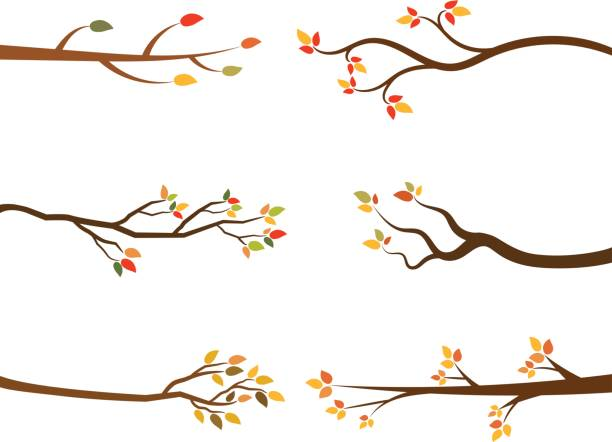 Autumn set of stylized tree branch silhouettes. vector art illustration