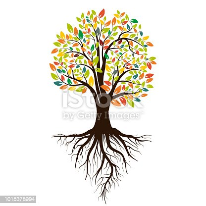 Autumn silhouette of a tree with colored leaves. Tree with roots. Isolated on white background. Vector illustration