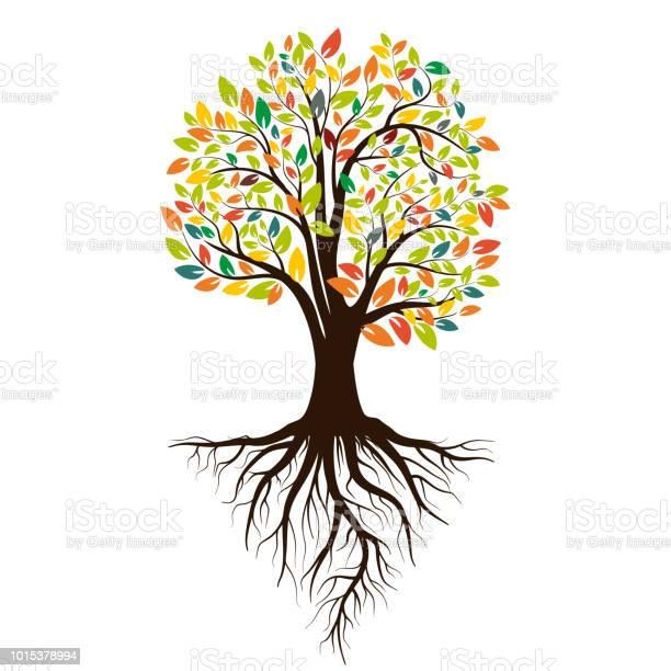 Autumn silhouette of a tree with colored leaves tree with roots on vector id1015378994?b=1&k=6&m=1015378994&s=612x612&h=bh2ydnof otqldre0e75kqgl uubfmv pe9xf q5idu=