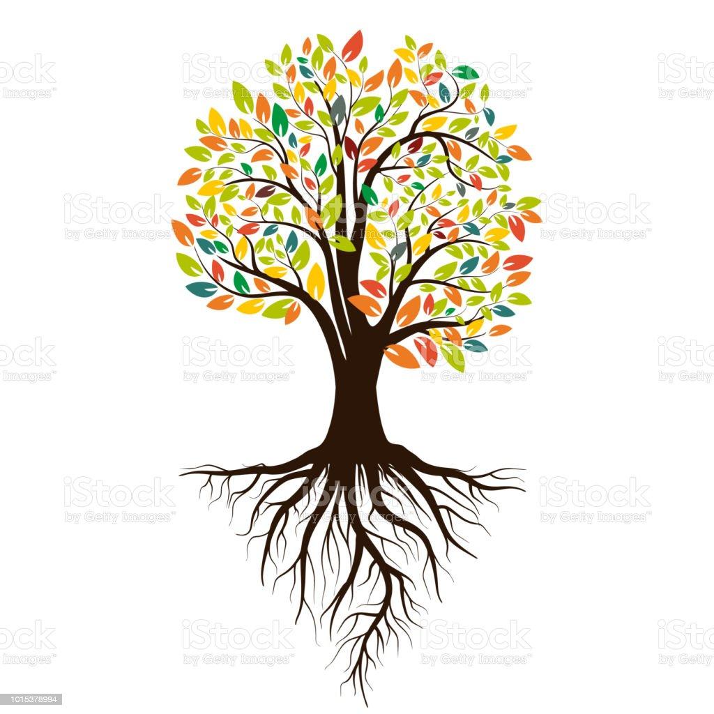 Herbst Silhouette eines Baumes mit farbigen Blättern. Baum mit Wurzeln. Isoliert auf weißem Hintergrund. Vektor-illustration – Vektorgrafik