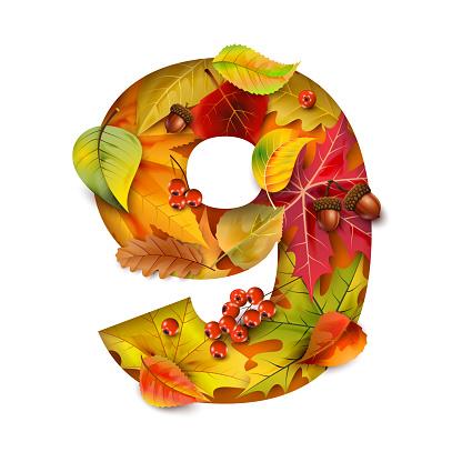 Autumn stylized alphabet with foliage. Digit9.