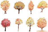 Autumn tree collection
