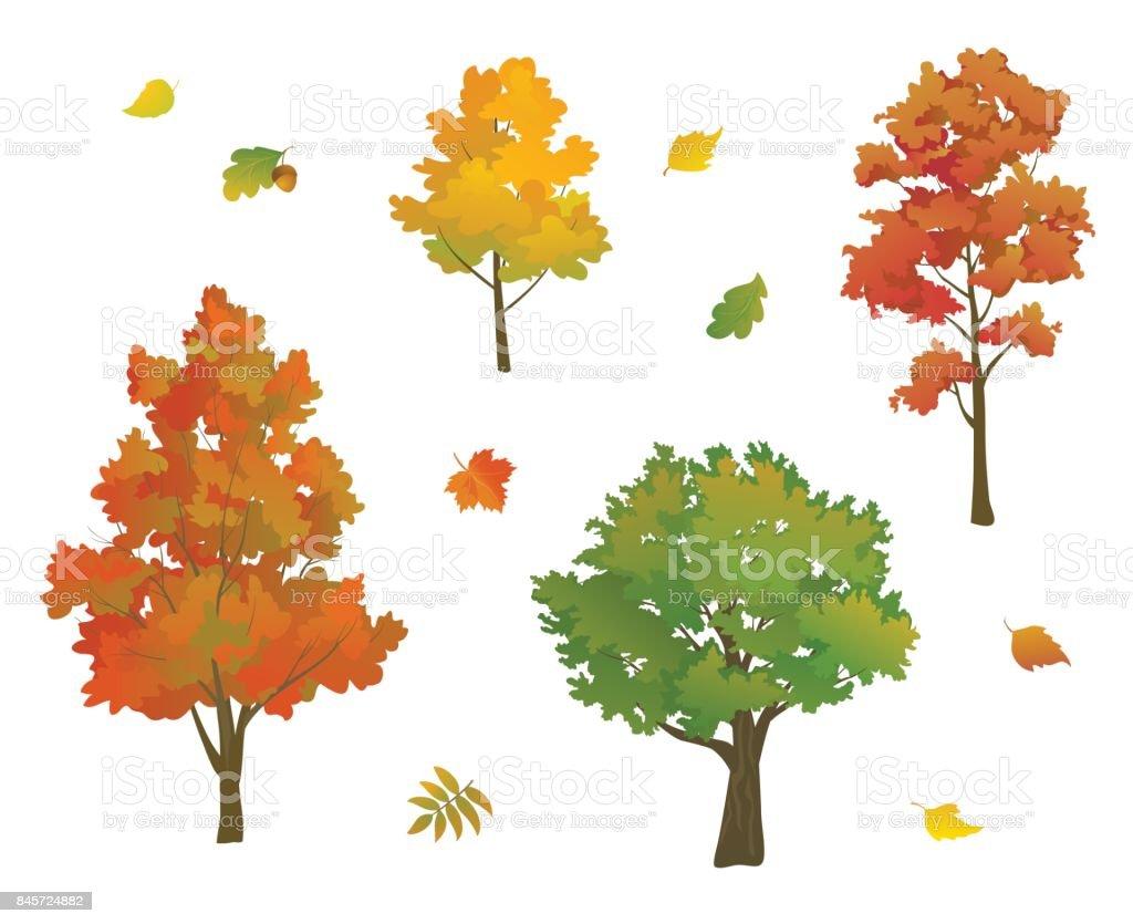 Autumn trees and leaves set vector art illustration