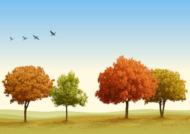 stockillustraties, clipart, cartoons en iconen met autumn trees - vogel herfst