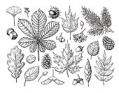 Autumn vector set with leaves, berries, fir cones, nuts, mushroo