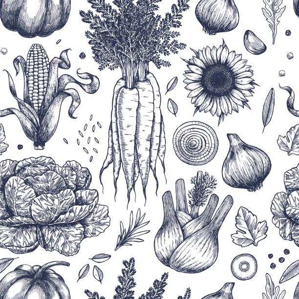 Autumn vegetables seamless pattern. Handsketched vintage vegetables. Line art illustration. Vector illustration Vector illustration harvesting stock illustrations
