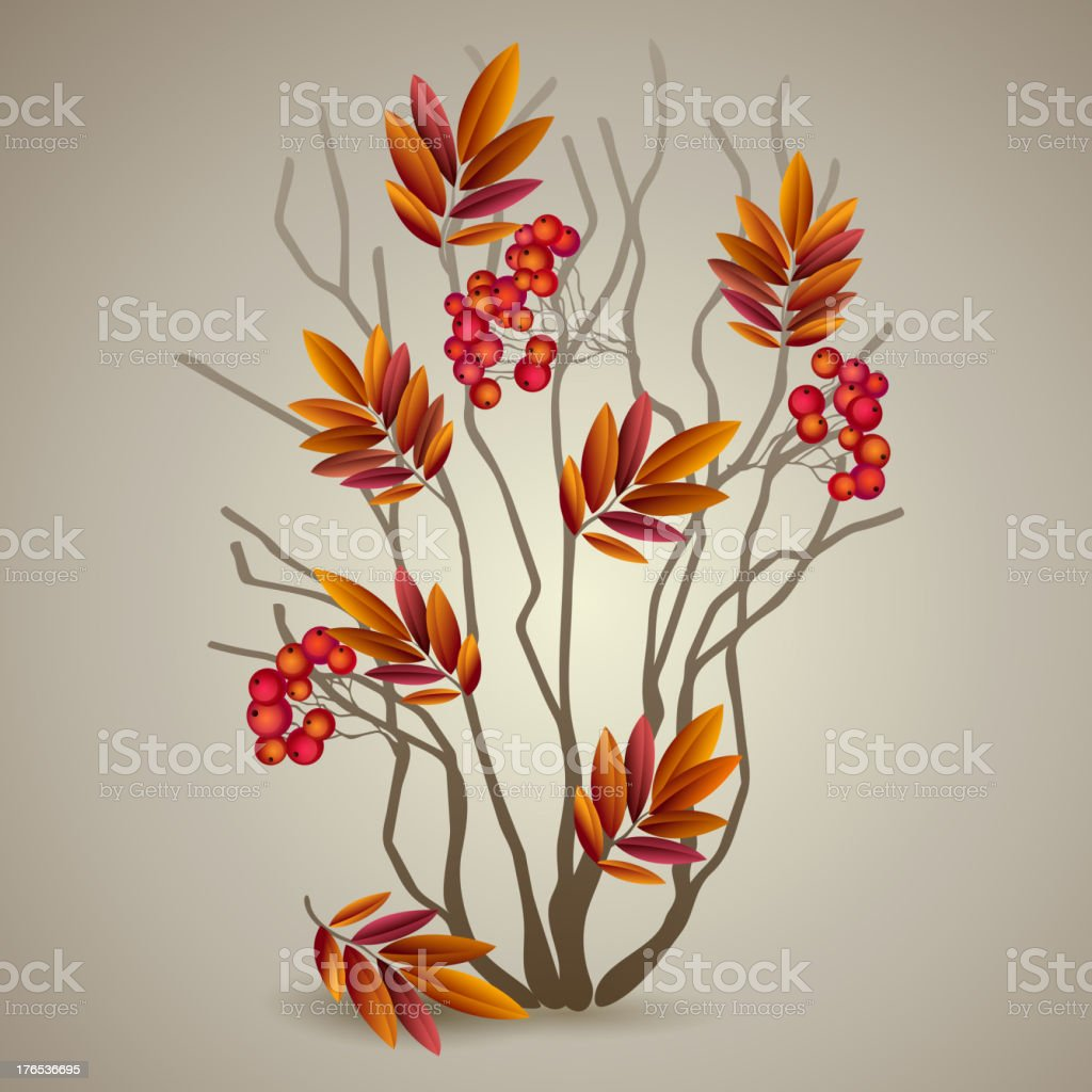 Autumnal colorful red rowan branch. Vector illustration royalty-free stock vector art