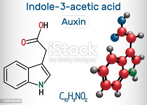 Auxin, Indole-3-acetic acid (IAA). Structural chemical formula and molecule model. Vector illustration