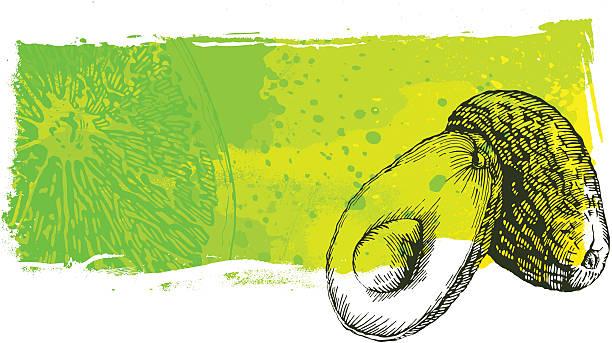 Avacado grunge banner Avacado grunge banner, very high detail - vector illustrtation avocado drawings stock illustrations