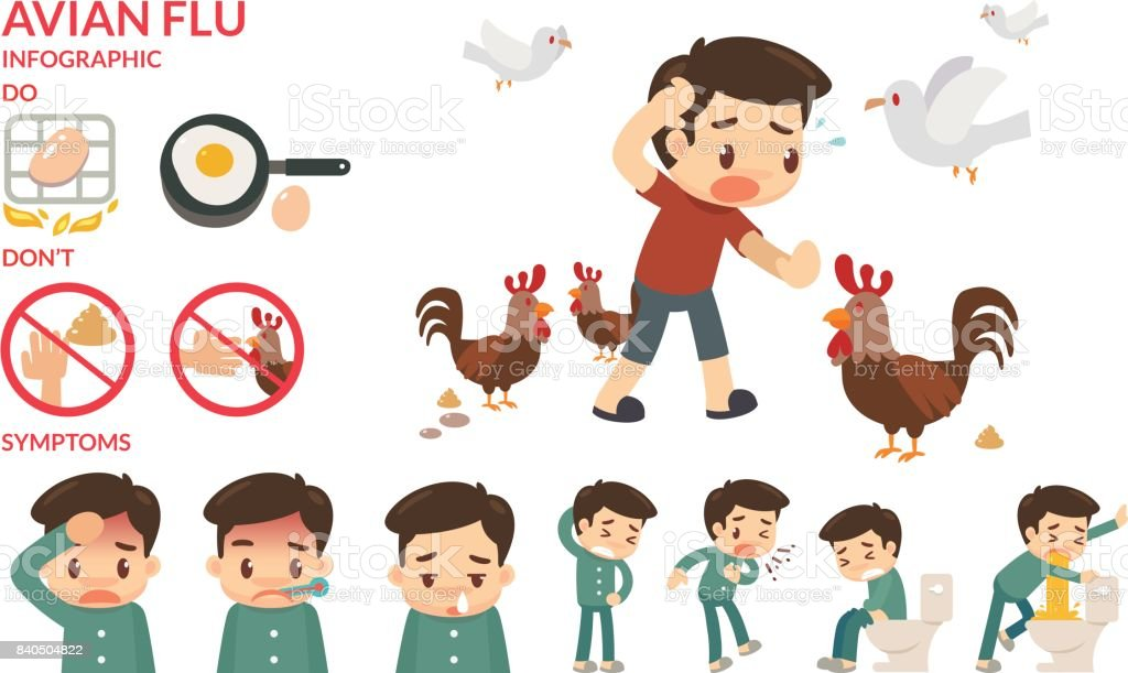 Avian flu infographic. vector art illustration