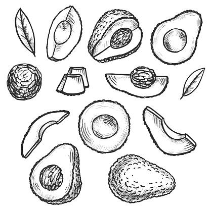 Avocado Doodles Set. Vector illustration.