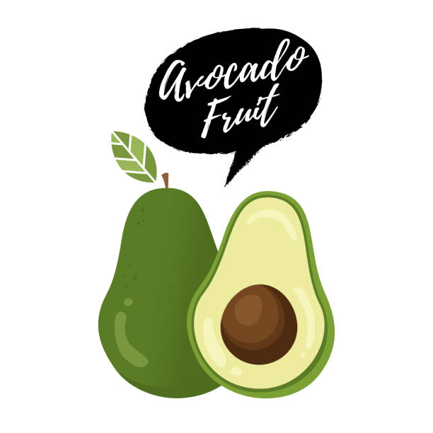 Avocado fruit vector illustration Avocado fruit vector illustration. Vector fresh fruit avocado. Whole avocado with leaf and half with seed avocado clipart stock illustrations