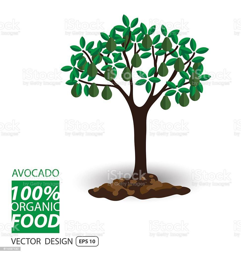 Avocado, fruits vector illustration. vector art illustration
